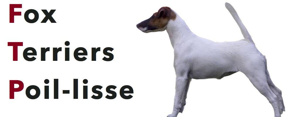 (c) Fox-terriers-poil-lisse.eu