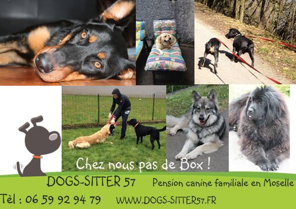 (c) Dogs-sitter57.fr